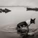 Departure Dog, Varanasi thumbnail