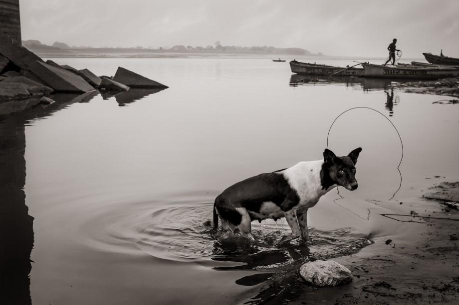 Departure Dog, Varanasi