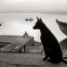 Dog at Lalita Ghat, Varanasi thumbnail