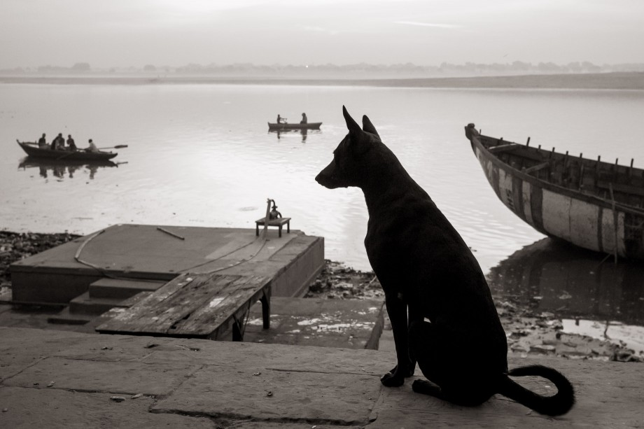 Dog at Lalita Ghat, Varanasi