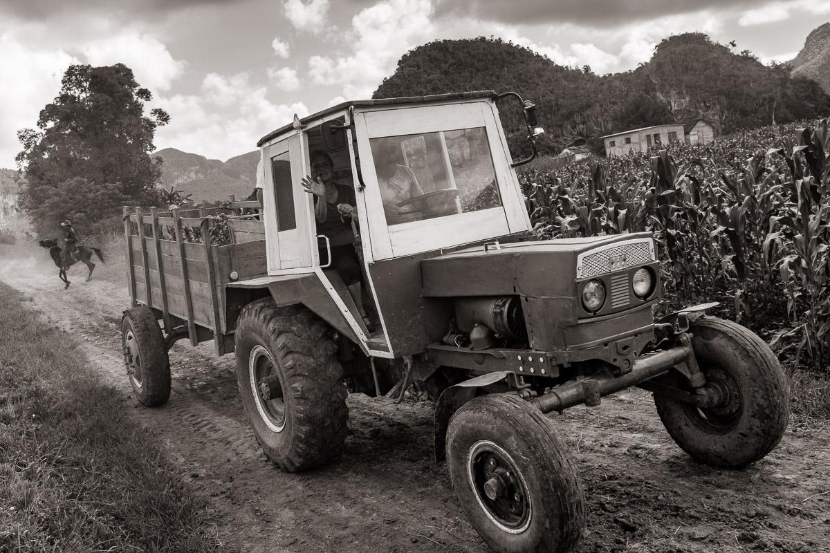 Tractor - Viñales